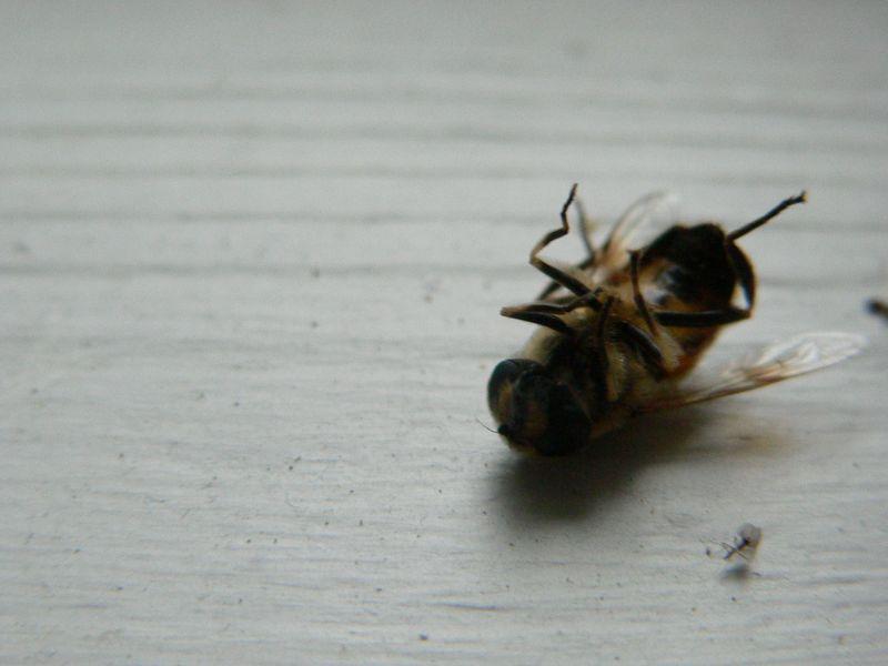 Wasp 029
