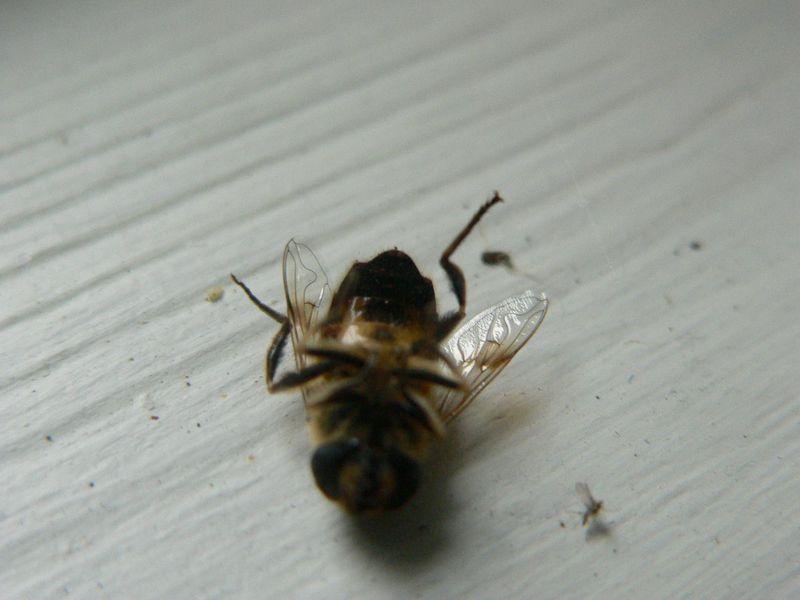 Wasp 019